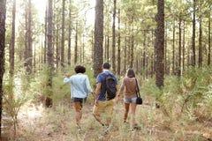 Amis heureux marchant dans une forêt Photographie stock