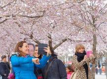 Amis heureux prenant un selfie parmi le beau cher de floraison Images libres de droits