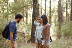 Amis inquiétés dans une forêt de pin Images stock
