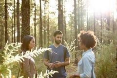 Amis parlant dans la forêt de pin Photo stock