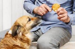 Amis pour toujours : homme alimentant son beau chien Image stock