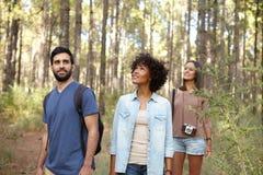 Amis recherchant dans la forêt Image stock