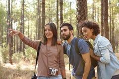 Amis regardant quelque chose dans une forêt Photo libre de droits