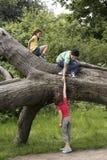 Amis s'élevant sur l'arbre tombé Photo libre de droits