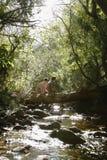 Amis s'asseyant sur le rondin au-dessus de Forest Stream Photo libre de droits