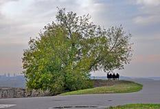 Amis sous l'arbre Images libres de droits