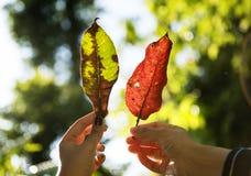 Amis tenant des feuilles Photographie stock libre de droits