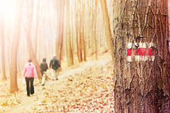 Amis trimardant dans les bois Photos stock