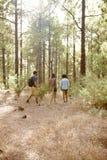 Amis trimardant sur une traînée des pins Photos stock