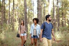 Amis visitant la forêt de pin Image stock
