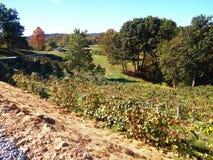 Amisches Land Ohio Stockbilder