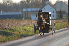 Amisches Pferd und Buggy Stockfotografie