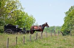 Amisches Pferd und Buggy Lizenzfreie Stockfotos