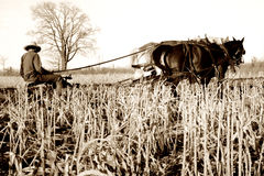amish άροτρο αλόγων Στοκ Εικόνες