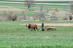 amish αγρότης Στοκ Εικόνες
