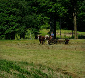 Amish arbetsdag Royaltyfri Fotografi