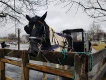 Amish barnvagnritt royaltyfria foton