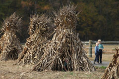 Amish boy peeking out of  corn shock Stock Photography