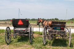 amish buggies Royaltyfri Bild