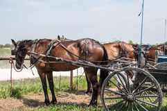 Amish buggies Royalty Free Stock Photography