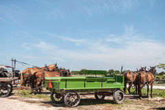 Amish buggies Stock Photo