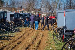 Amish Buggies at the Sale. Gordonville, PA, USA - March 10, 2018: Buggies in a muddy field ready to be sold at the annual Lancaster County Mud Sale at the Stock Image