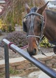 Amish horse tied to hitching post royalty free stock images