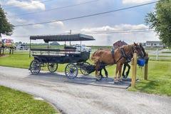 Amish Buggy Ride Tours Stock Photo