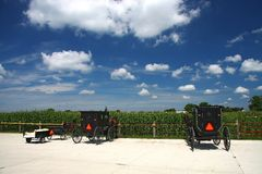Amish carriage. By the corn field Royalty Free Stock Photo