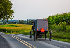 Amish carriage. Swiftly moving down rural country road in Pennsylvania and cornfield in background Stock Photography