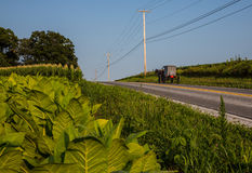 Amish carriage. Swiftly moving down rural country road in Pennsylvania and tobacco field in foreground Stock Image
