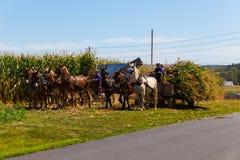 Amish che raccolgono cereale Fotografia Stock