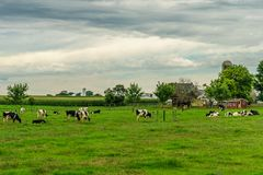 Amish country farm barn field agriculture and grazing cows in Lancaster, PA Stock Photos