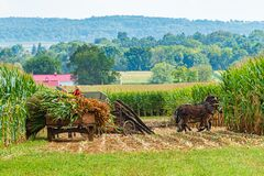 Free Amish Country Field Agriculture, Harvest, Horse, Farm, Barn In Lancaster, PA Stock Images - 169713474