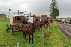 Amish fördelauktion i Pennsylvania Royaltyfria Foton