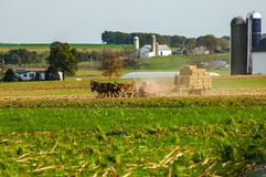 Amish Family Harvesting the Fields on an Autumn Day pt 5 royalty free stock photos