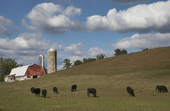 Amish Farm in Lancaster County, Pennsylvania. Amish farm with cows in the foreground in Lancaster County, Pennsylvania Stock Photo