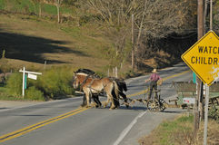 Amish Farmer Crossing the Road Royalty Free Stock Photos
