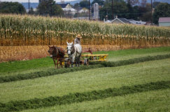 Amish farmer. In field during fall season in rural Pennsylvania royalty free stock image
