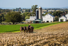Amish farmer. In field during fall season in rural Pennsylvania with farm in background royalty free stock photography