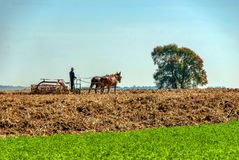 Free Amish Farmer Harvesting His Wheat Using 2 Horses Pulling His Harvester On A Sunny Summer Day Stock Photo - 163220490