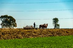 Amish Farmer Plowing the Fields royalty free stock photography