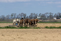 Amish Farmers Tilling the Earth Royalty Free Stock Photography