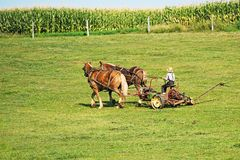 Amish Farming. Amish Farmer tending to Fields in Lancaster County Pennsylvania Stock Photo