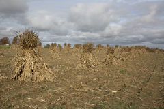 Amish farms bring in the fall harvest. Royalty Free Stock Photography