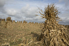 Amish farms bring in the fall harvest. Stock Photography