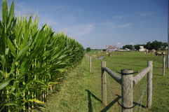 Amish fence - landscape Royalty Free Stock Photos