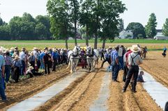 Amish Field Work Demonstration stock image