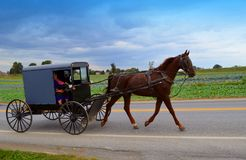 Amish folk i häst och barnvagn Royaltyfria Foton