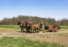 Amish getting the fields ready. Horse drawn farming equipment preparing the fields for a new season Stock Photo